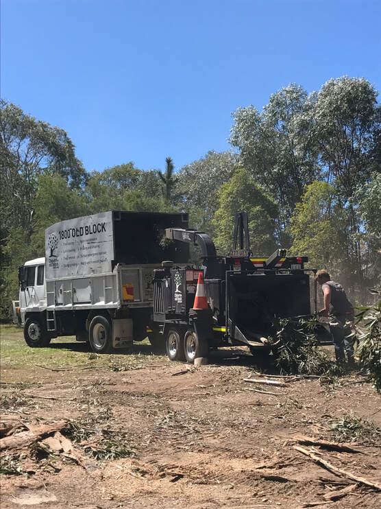 Burleigh Waters Tree Services
