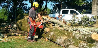 Tree Removal Canungra