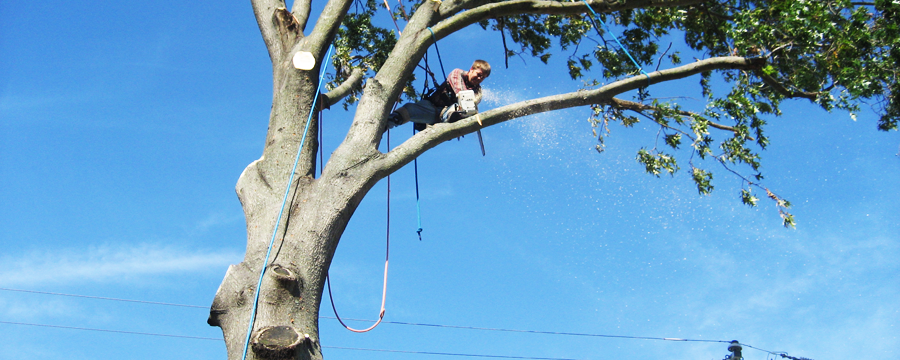 Tree Removal Helensvale