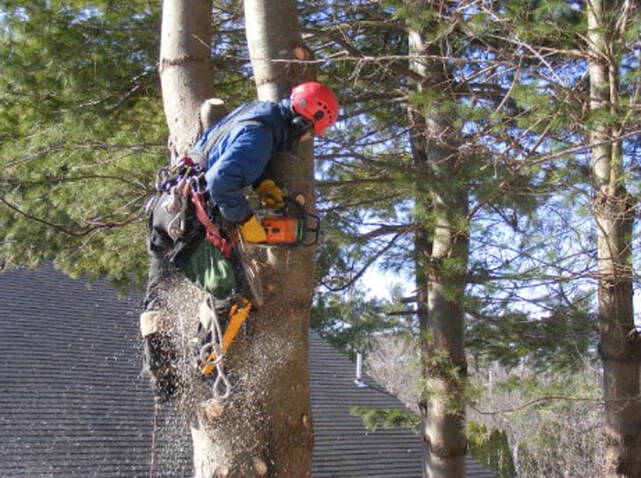 Tree Lopping Southport