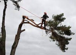 Tree Pruning Benowa