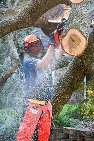 Benowa Tree Services
