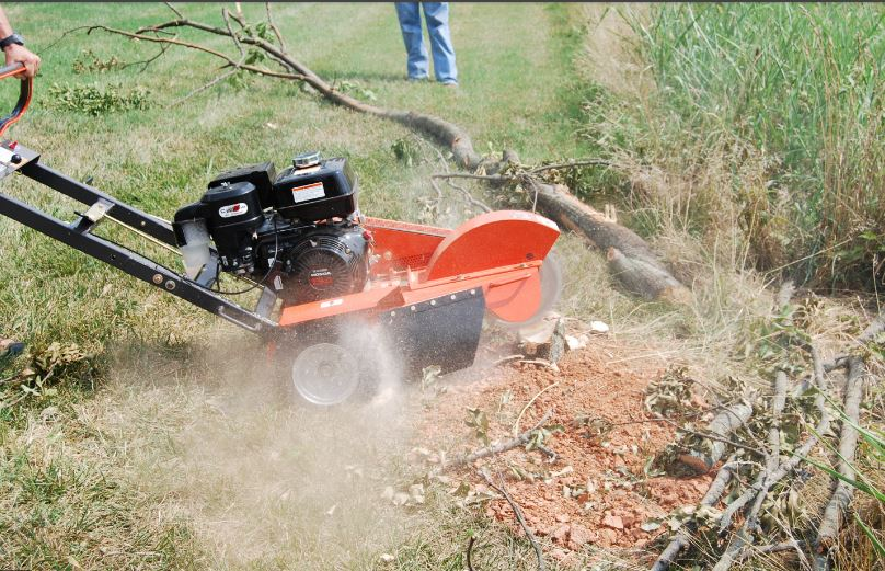 Stump Grinding Bundall