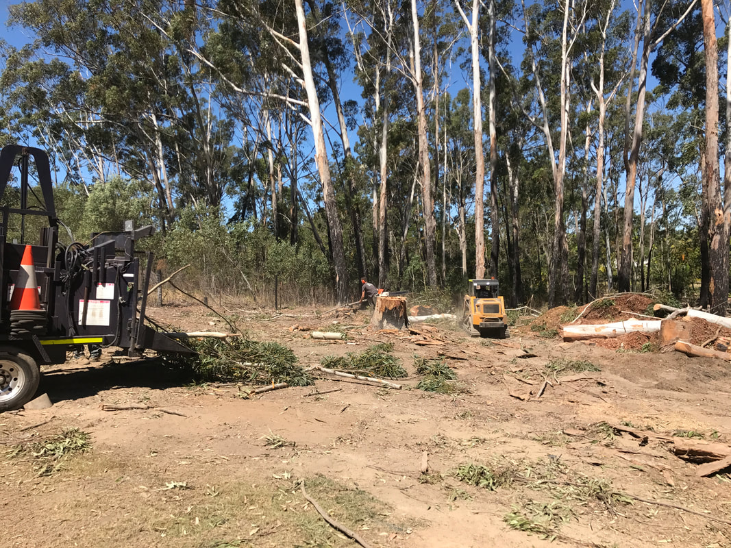 Tree Services Bundall